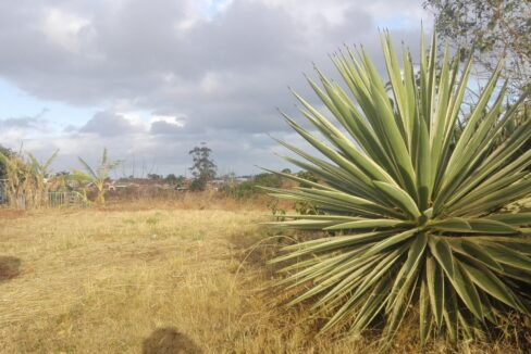 Vacant Land For Sale Marburg